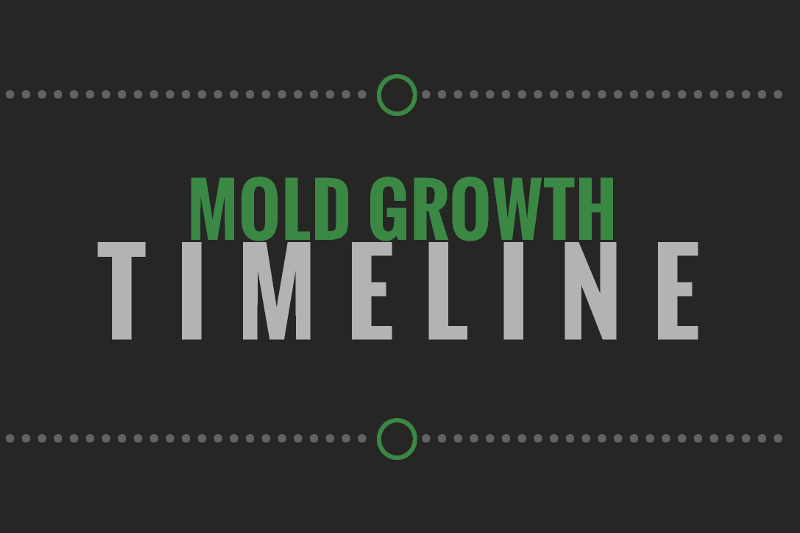 mold growth timeline